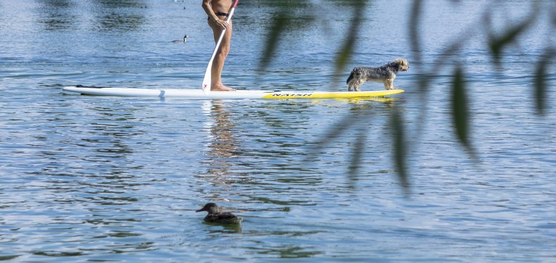 best stand up paddle boards for dogs