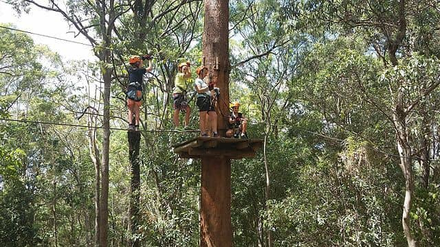 How to Setup a Climbing Tree Stand