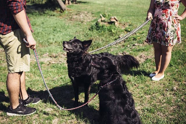Teach Your Dog Special Commands